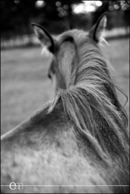 Horse Opelousas, LA